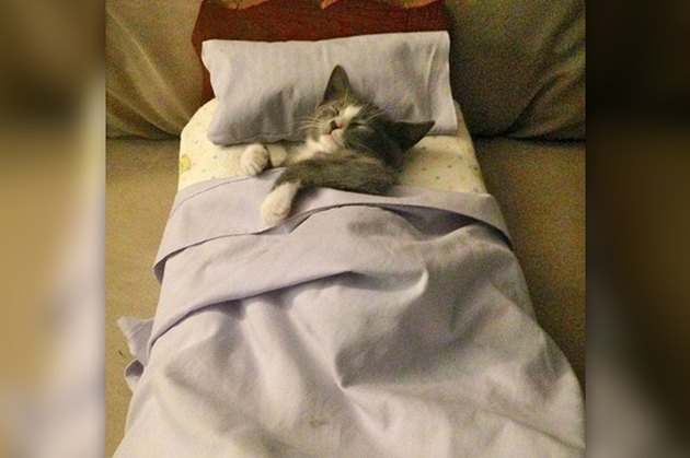 kitten sleeping in a tiny bed