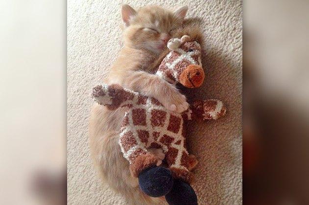 sleeping kitten cuddling toy giraffe