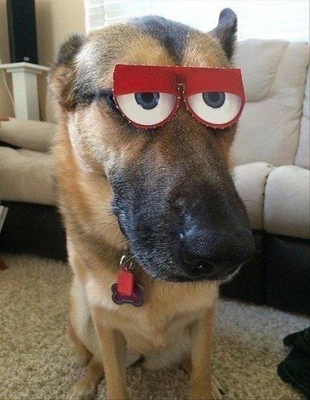 Dog with fake, funny eyes