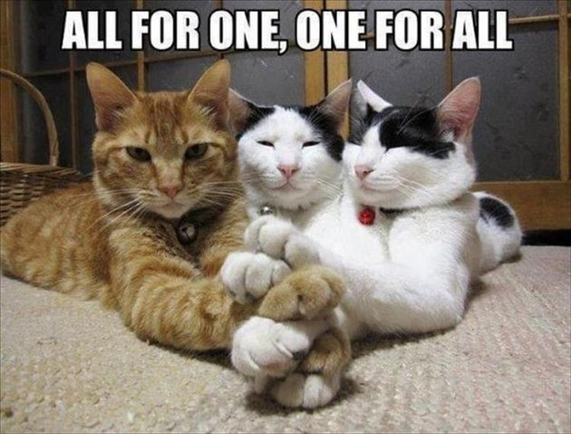 Three cats holding paws