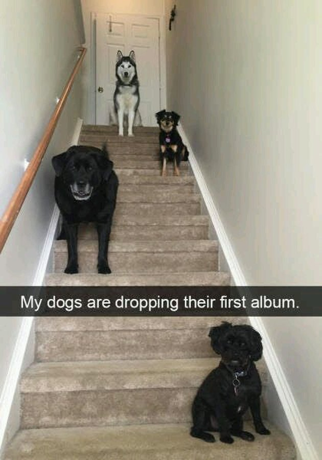 Dogs looking like their on an album cover
