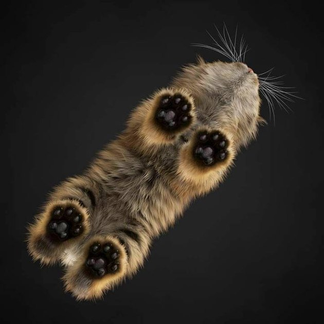 Underside of cat