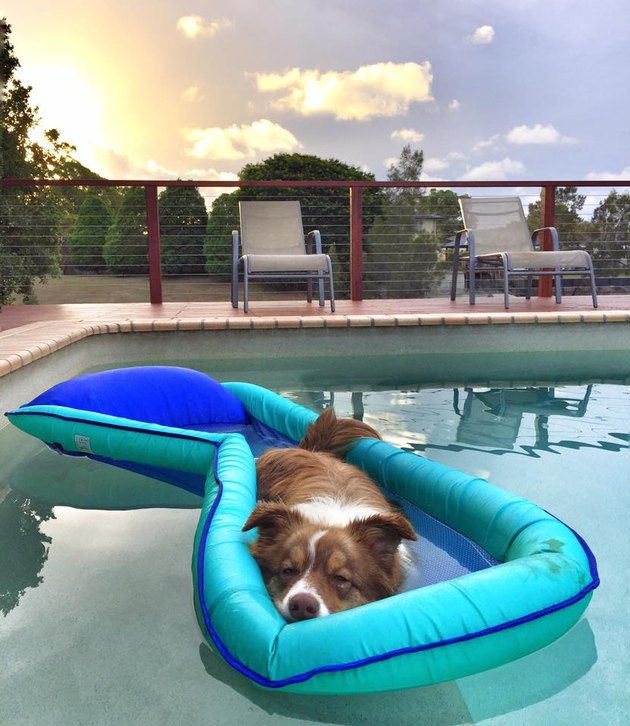 Just 21 dogs doin themselves a pool float