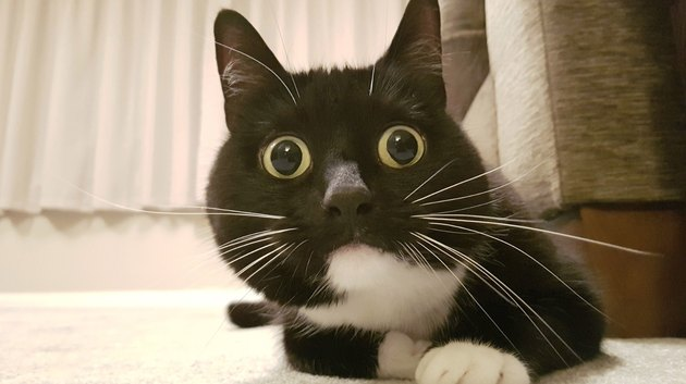 Startled cats losing their damn mind