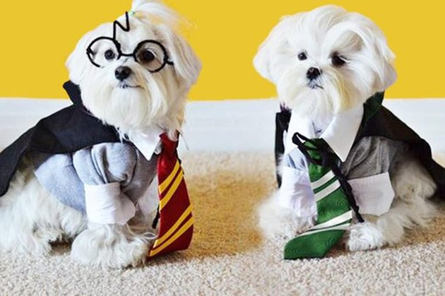 harry potter dogs!