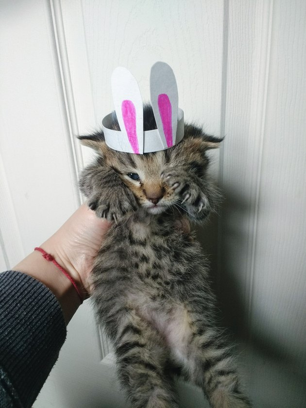 This Providence woman makes tiny hats for her foster kittens. The reason why will restore your faith in humanity.