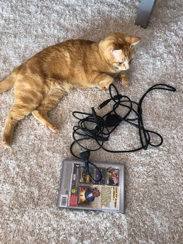 Cat with gaming peripheral cables and video game in box