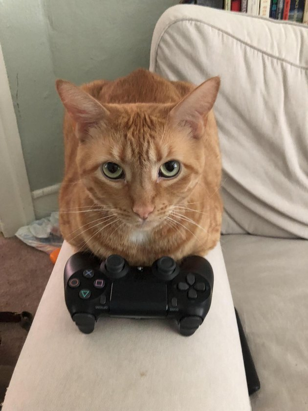 Cat with video game controller