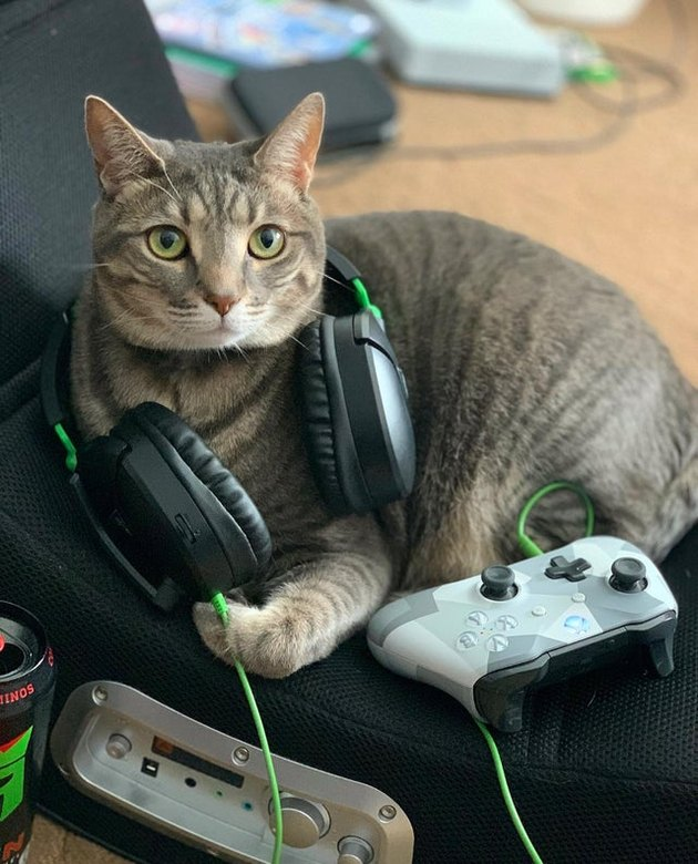 Cat with gaming controller and headphones