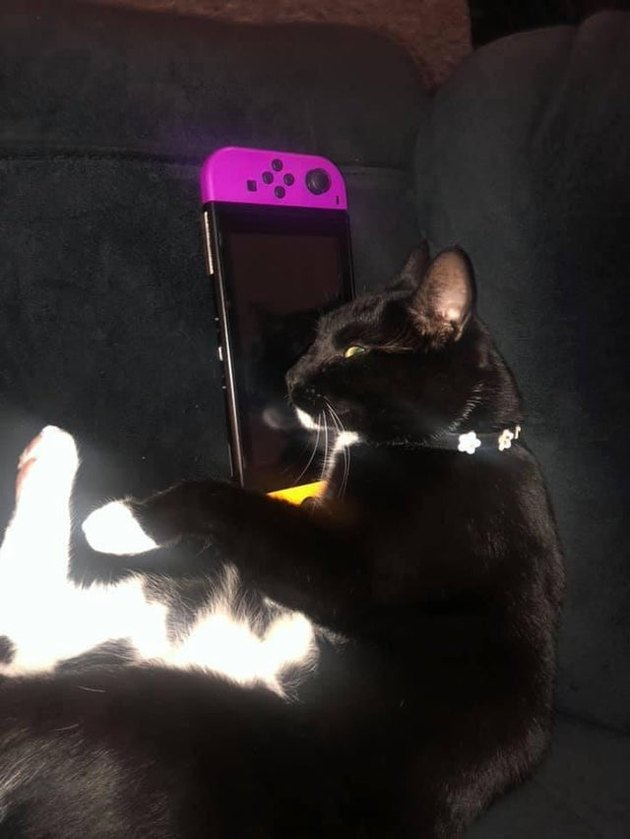 Cat laying on Nintendo Switch