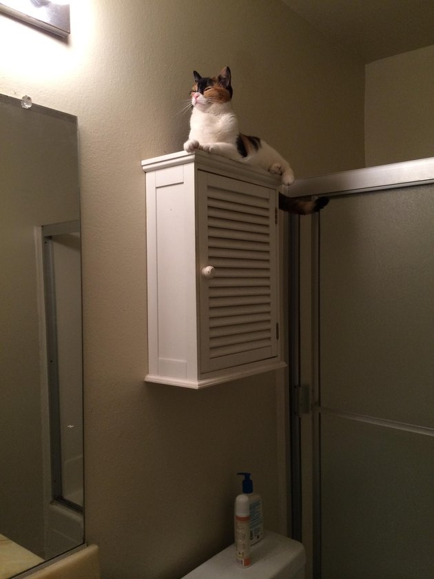 Very noble cat sitting on medicine cabinet