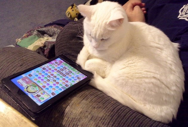 Cat looking at tablet displaying mobile game