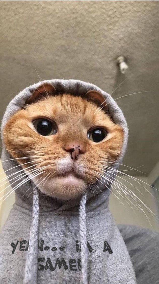 "Cat wearing hoodie that says ""Yeah... I'm a gamer"""
