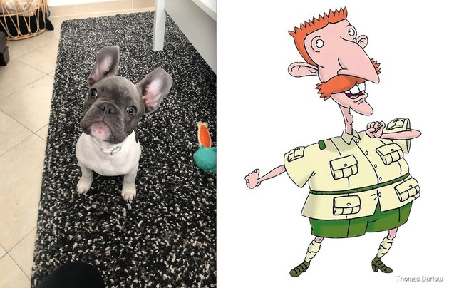 French bulldog named after Nigel Thornberry from Nickelodeon cartoon