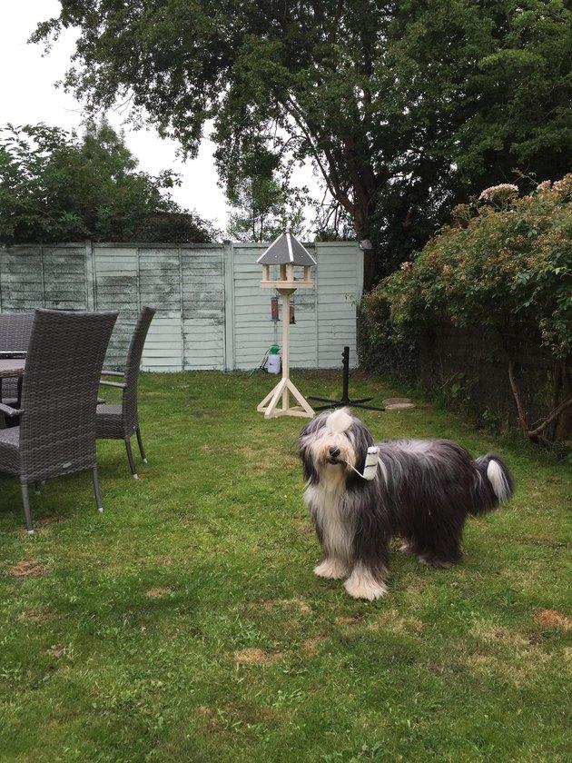 Dog stole a paint roller