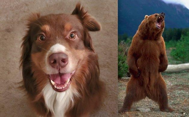 dog named bear