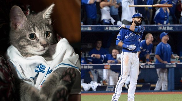 kitten named after Jose Bautista