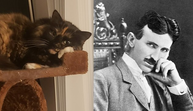 cat named after Nikola Tesla