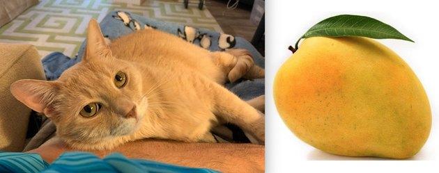 cat named Peaches