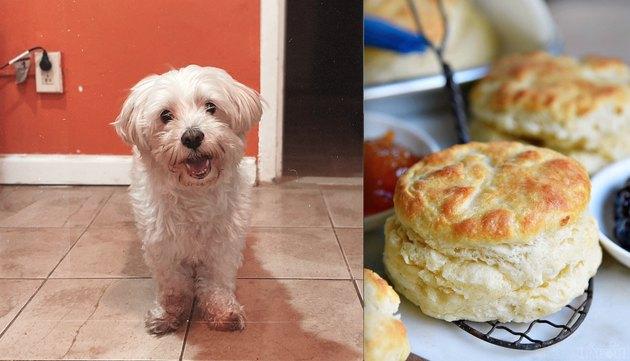 dog named Biscuit