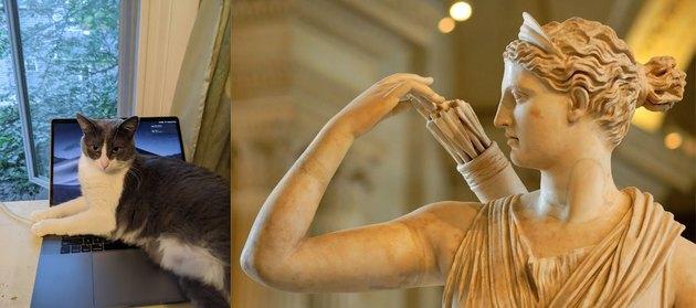 cat named after Artemis goddess of archery