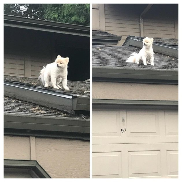 Dog sitting on roof.