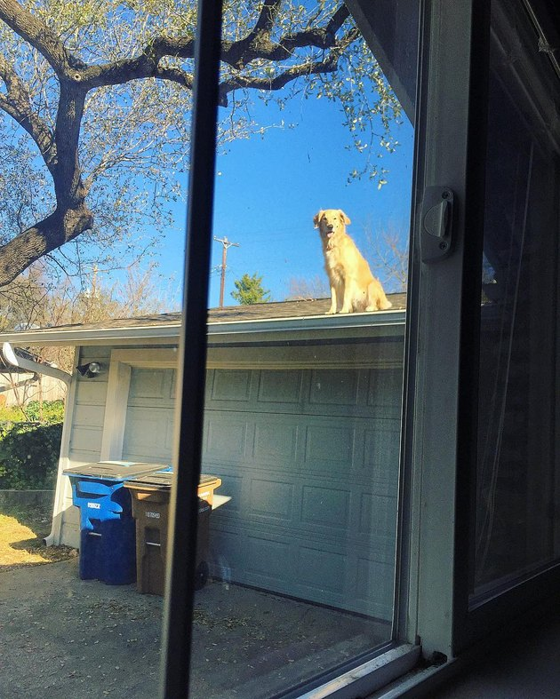 Dog sitting on garage roof.