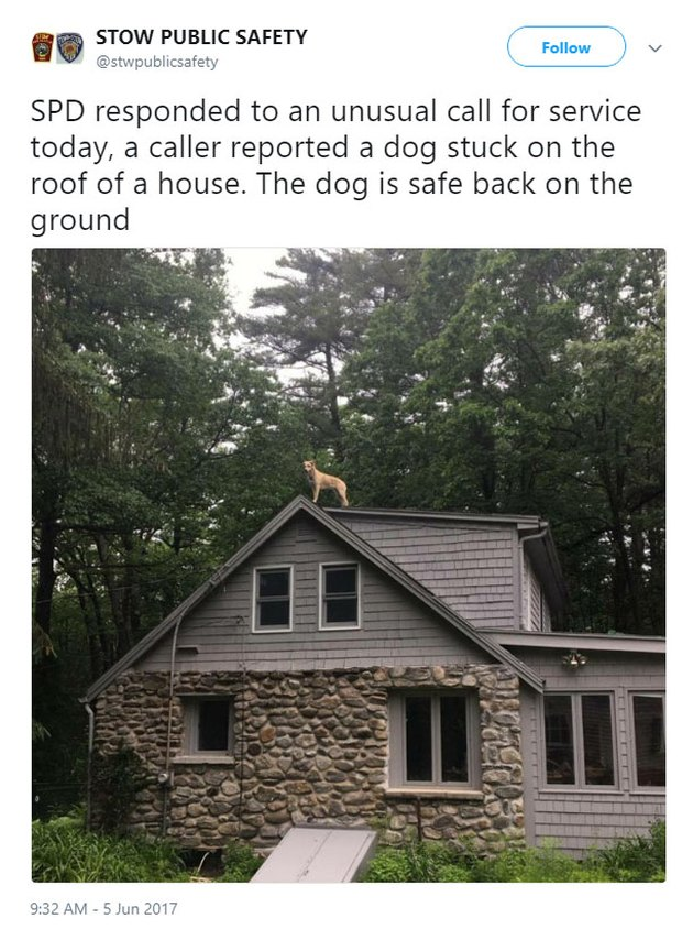 Tweet from Public Safety with picture of dog on roof.