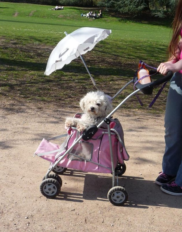 fluffy dog with umbrella