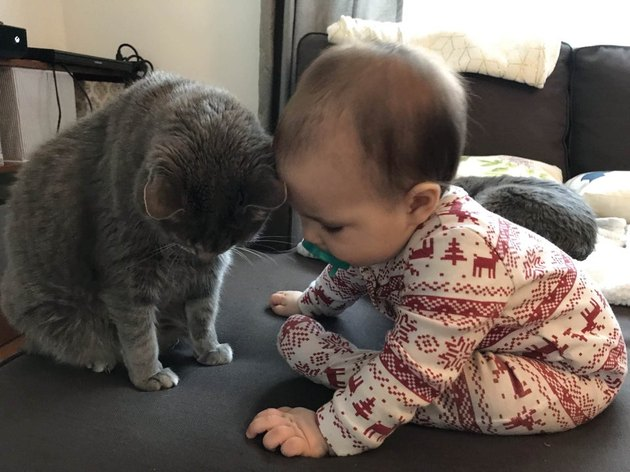 Cat and baby touching foreheads.