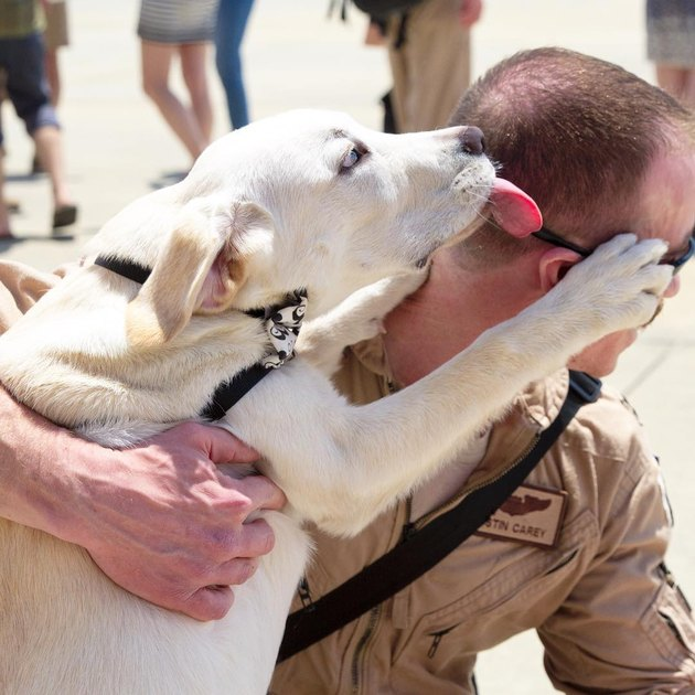 Dog excited to see soldier returning home