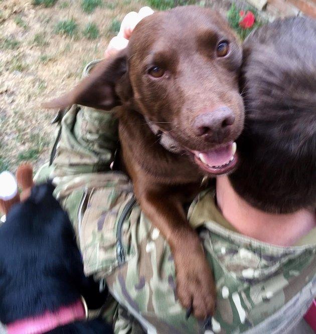 dog hugs soldier returning home