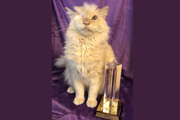 Sir Thomas winning the CatCon award.