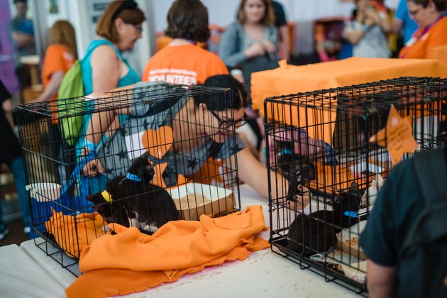 kittens at adoption being petted by a woman