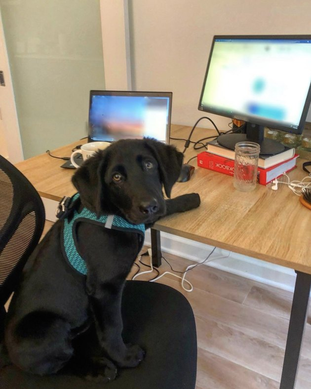 dog in front of two computer screens