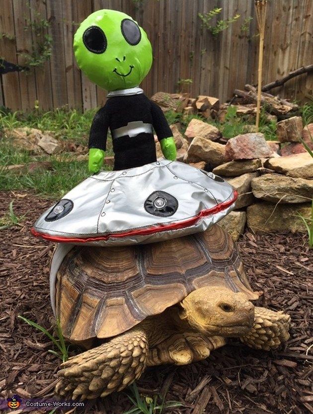 tortoise in alien costume