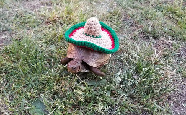 tortoise in crocheted sombrero