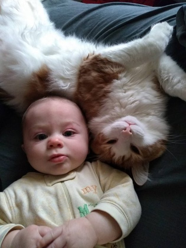 Cat pressed up against baby's head.
