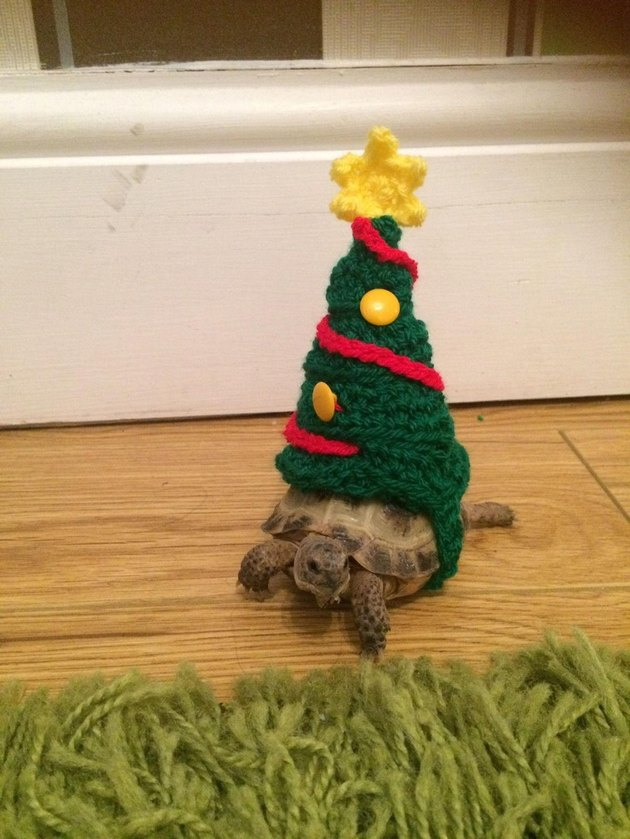 tortoise in christmas tree costume