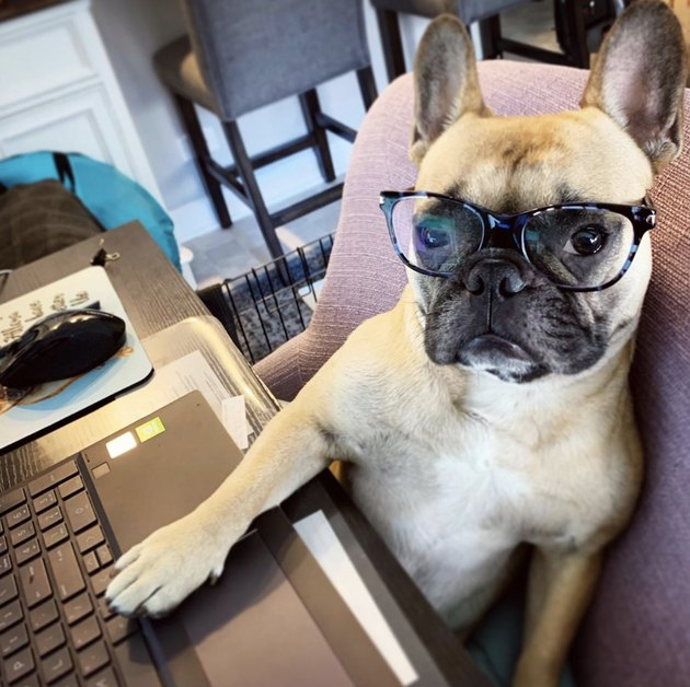 dog in glasses with paw on laptop