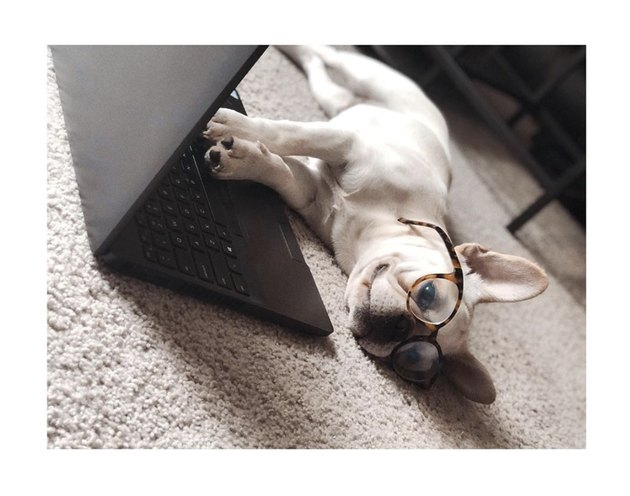 dog on the floor with open laptop in front of him