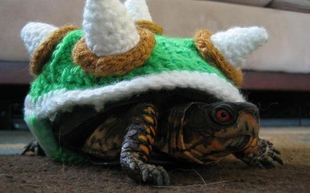 tortoise in bowser costume