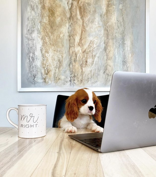 dog drinking coffee in front of open laptop