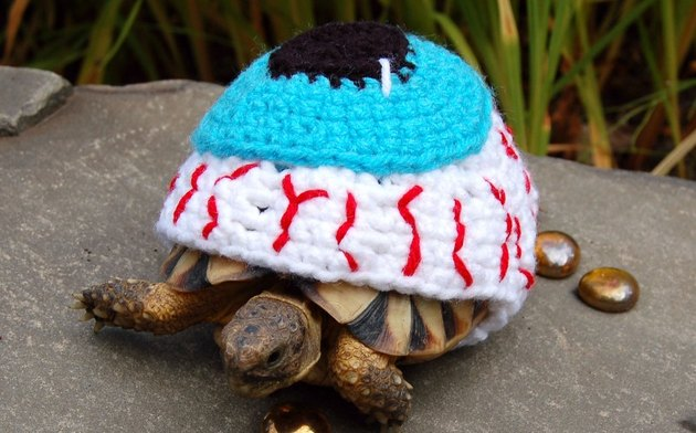 tortoise in eyeball costume