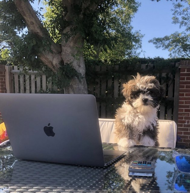 dog sitting by laptop outside on the patio