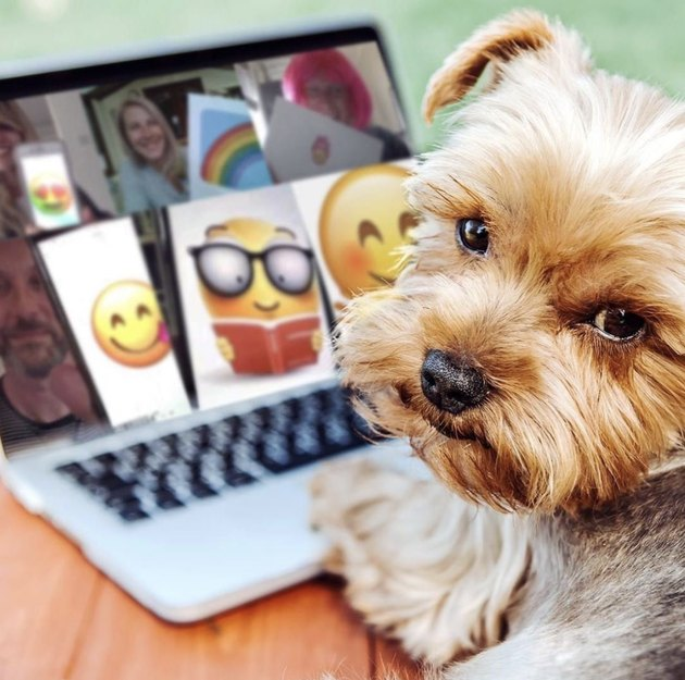 grumpy dog sitting in front of laptop