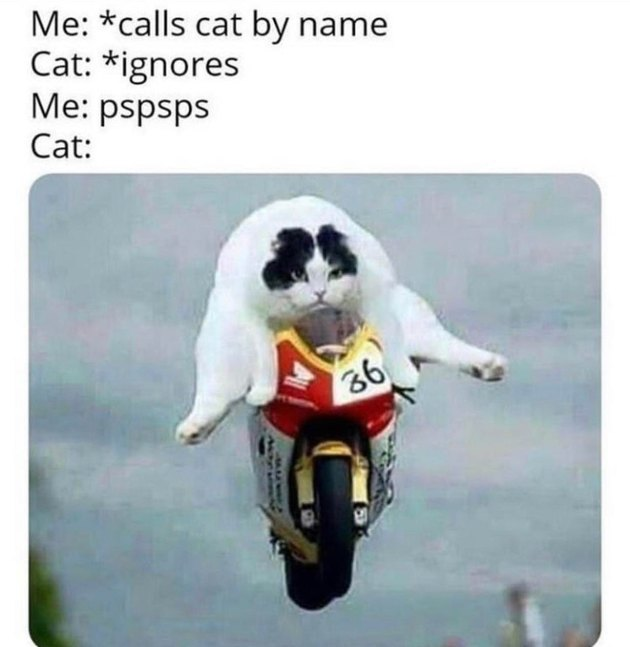 cat jumps motorcycle when human says pspsps