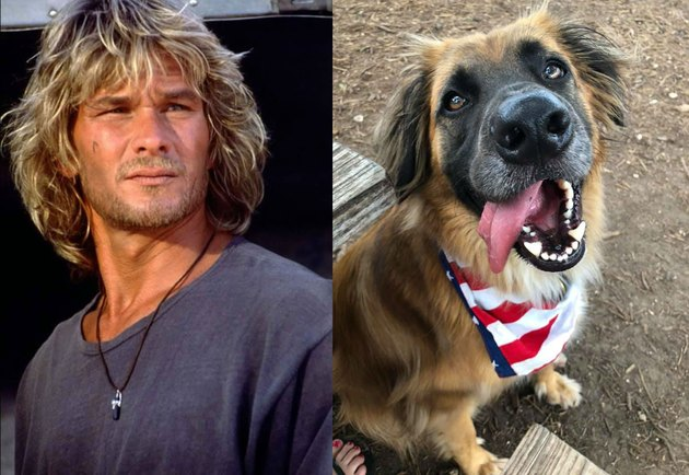 Dog named Bodhi after character from Point Break