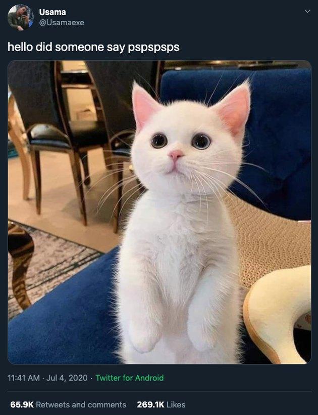 white kitten reacts to pspspsps