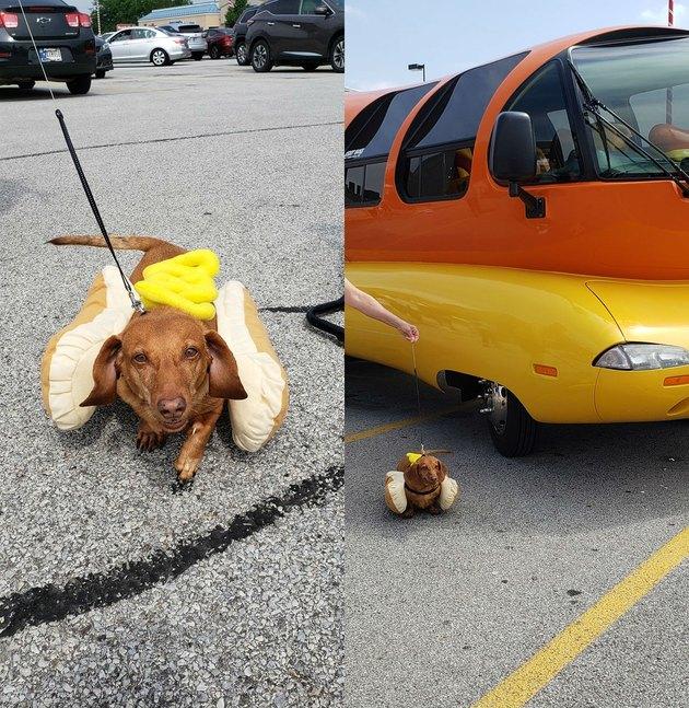 Dog named Tugboat